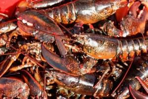 2011-08-17-06-37-37-Lobster
