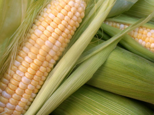 photo-corn-full