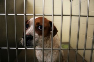max_400_sad-scared-dog-at-dog-pound
