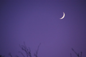 Waxing_Crescent_Moon_-_geograph.org.uk_-_1627064