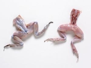 frog-legs-skinned